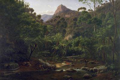 Fern Tree Gully, Cape Otway Ranges; c 1869; 1999/0119