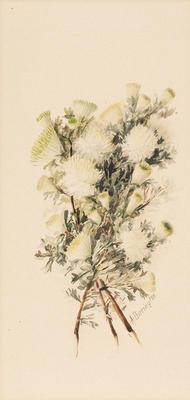 Dryandra Floribunda