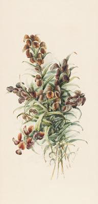 Pterostylis vittata