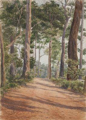 Karri forest I