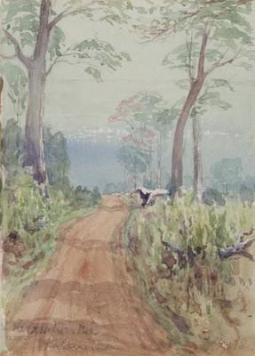 A misty morning (Kalamunda)