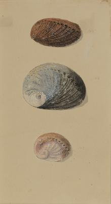 Untitled (shells); c 1818; 2000/0047