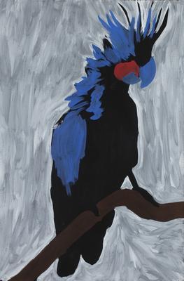 Palm Island Cockatoo
