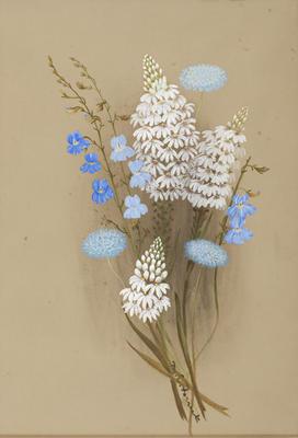 Goodenia ?Caerulea; Goodenia Scapigera; Brunonia Australis (Native Corn Flower)