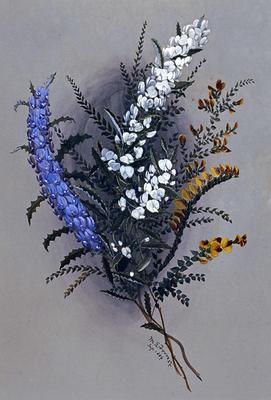 Hovea chorizemifolia [holly-leaved hovea, purple and white forms); Bossiaea pulchella