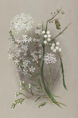 Olax Benthaminiana; Ricinocarpos Glaucus; Leucopogon SP: Drosera ?Pallida; Acacia Diptera; Burchardia Multiflora (Milkmaids).