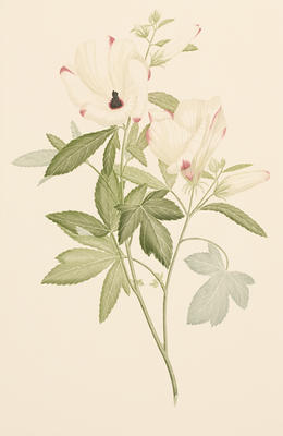 Hibiscus meraukensis (from Banks' Florilegium Part I); 1772-1784 {plate made}; 1979 {date published}; 1979/0Q40.23