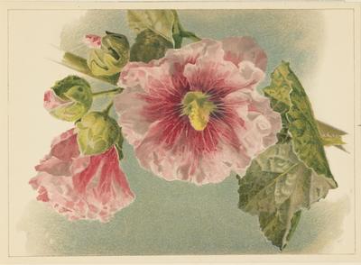 Pink Hollyhock; 1886; 1970/Q108